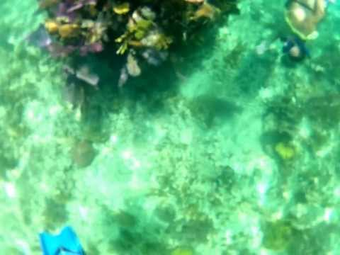 Coral reef part 1. Belize guide, snorkel.