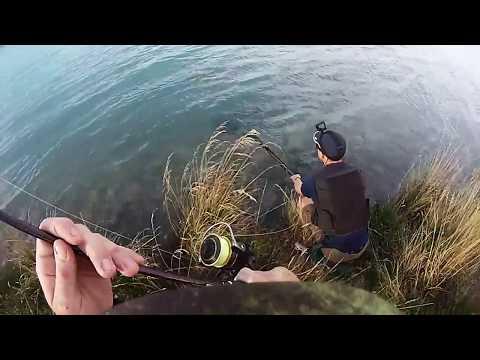 MASSIVE Lake Benmore Salmon