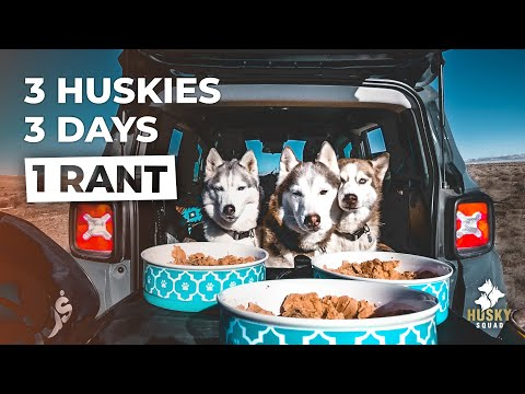 Road Trip With My Dogs + Raw Food Husky Vlog