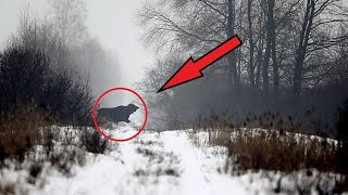 What scientists discovered in the CHERNOBYL FOREST shocked the whole world!