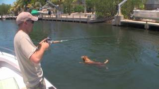 TARPON FISHING - Golden Retriever attacks tarpon!