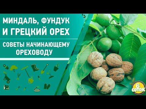 Миндаль, фундук и грецкий орех. Советы начинающему ореховоду. 6 соток 16.09.2019