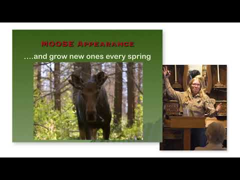 Lions, Moose & Bears – Oh My! | Frisco Museum Lecture Series