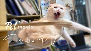 ペットムービー スライドムービー Pet movie Photo Slide PV