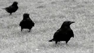 Producto interior bruto - Crio cuervos
