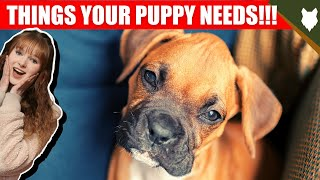 THINGS YOU'LL NEED FOR YOUR BOXER PUPPY