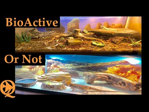 bioactive-vs-tiled-floor-bearded-dragon-setup