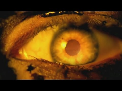 SLAYER - Eyes of The Insane (OFFICIAL MUSIC VIDEO)