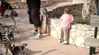 Attica Zoological Park-Αττικό Ζωολογικό Πάρκο