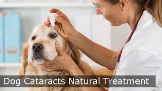 Dog Cataracts Natural Treatment