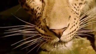 CES 2016: Hisense Press Conference - Leopard Video