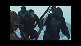 Bad Ape Chase Scene | War for the Planet of the Apes (2017)#LOWI