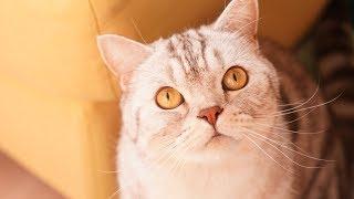 고양이도 집사들을 차별해요! 남집사 VS 여집사