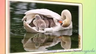 В мире животных.Мамы и дети