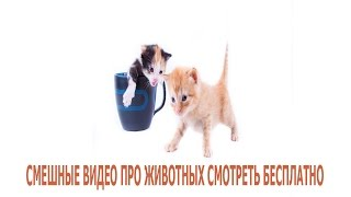 смешные видео про животных смотреть бесплатно