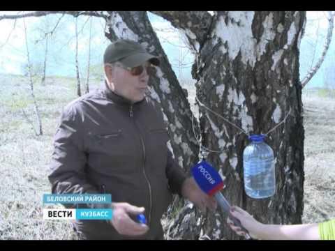 Вопрос: Когда собирать березовый сок в Сибири Какие сроки сбора?