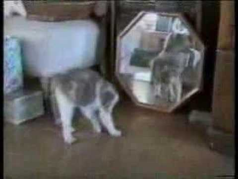 Afv Cats Getting Scared