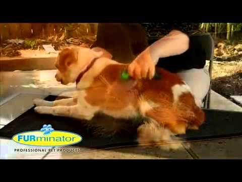 Купить собаку или щенка в зоомагазине харькова: большой выбор пород собак и щенков в харькове продажа собак (щенков) от владельцев. На ria. Com вы можете купить щенка или собаку в харькове, также есть. Бульдог (1).