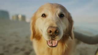 WeatherTech Super Bowl ad featuring Scout