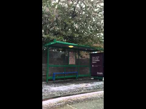 Snowy blossom bus stop.