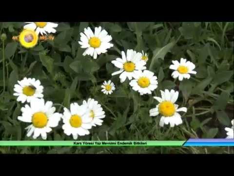 kars yöresi yaz mevsimi endemik bitkileri 4k uhd