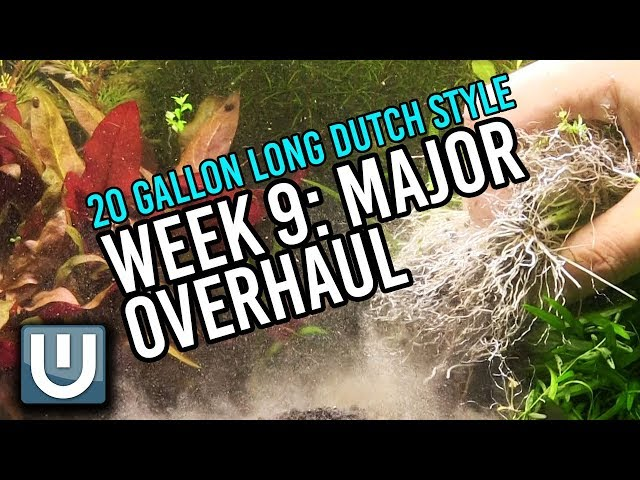 Major Overhaul | 20g Dutch Style | Week 9 Update