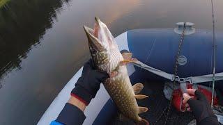 Рыбалка на щуку на поверхностные приманки от Yo Zuri Hardcore
