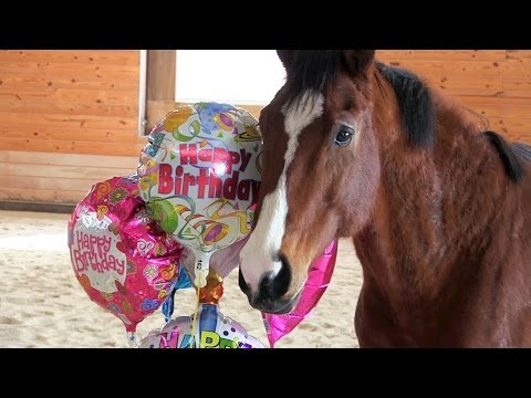 Thumbnail Balloons Are the Highlight of Horse Party