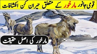 Interesting Facts About National Animal Of Pakistan Markhor