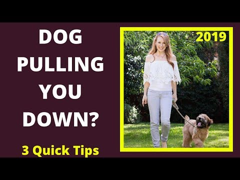 dog-pulling-you-down-the-street?