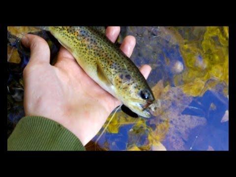 Fall tenkara trout fishing in the southern california for Trout fishing southern california