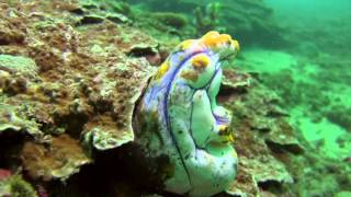 Bali Dive Safari Island Tracking Paul Ranky Copyright VideoClip16