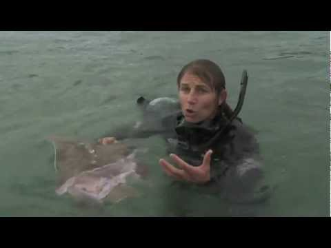 Dr Ingrid N. Visser & the Orca Research Trust Swimming with Orca Killer whales Schwertwal