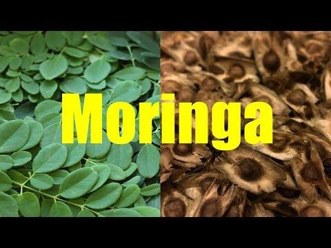 Growing and Harvesting Moringa with Pamela Mace