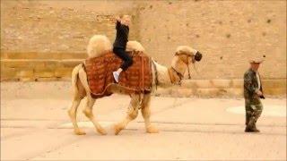 Едем на дискотеку на площади Регистан(Замечательный верблюд Яшка показывет достопримечательности древнейшего города Бухары. Крепость Арк., 2016-04-22T19:32:53.000Z)