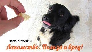 Урок 12/Ч.2 Лакомство для щенка. Какое из них НЕ ВРЕДНОЕ для щенка?