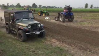 thar jeep with tavia