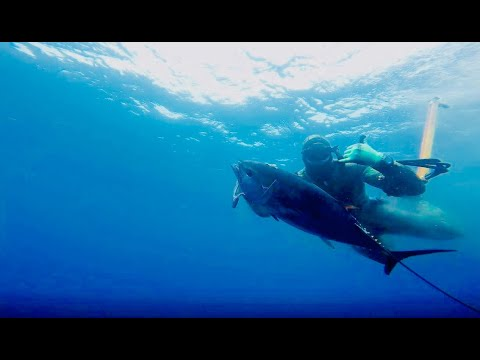 Bluefin Tuna: Tips & Tactics