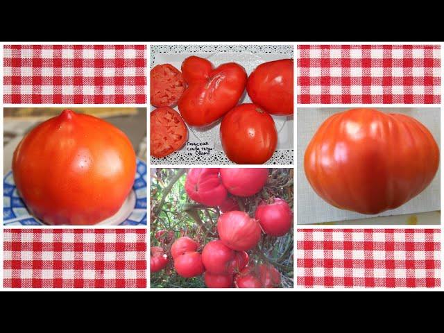 Семейные сорта томатов - вкусные и урожайные!
