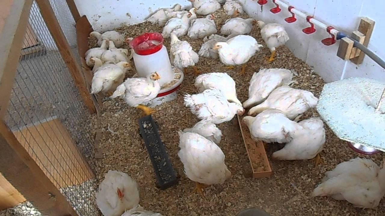 кормушки и поилки для цыплят бытовые - YouTube