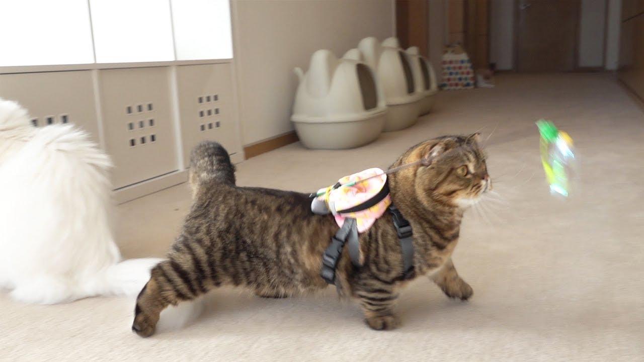 Hai Pencinta Kucing 5 Channel Youtube Yang Wajib Kamu Tonton