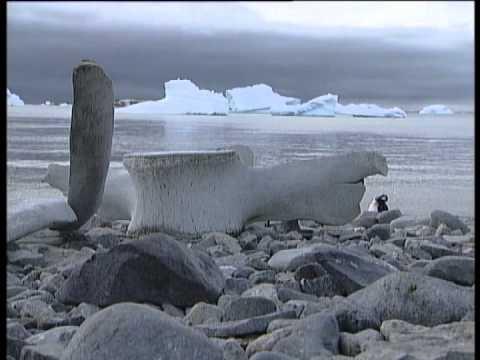 Adventure Tours with Greg Grainger: Wildest Antarctica