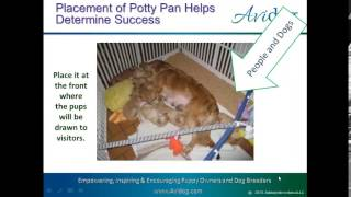 Potty Training Your Litter tip #1