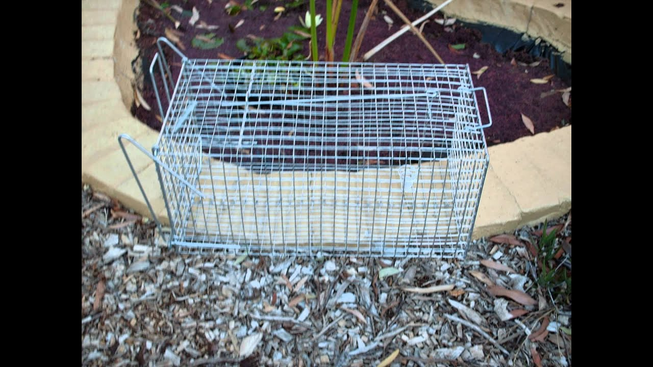 P & L WIRE PRODUCTS POSSUM TRAP PH.03 97863791 - YouTube