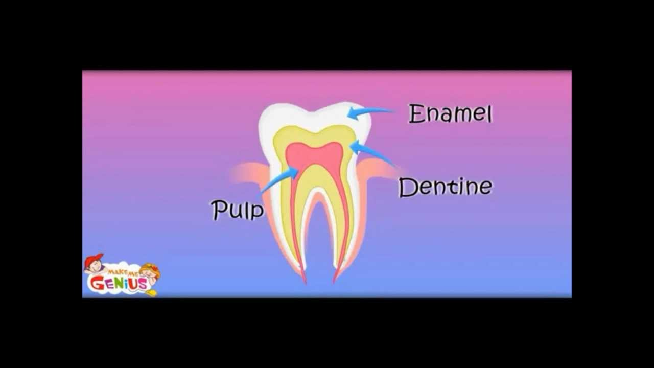Tooth structure inside a tooth lesson education videos by tooth structure inside a tooth lesson education videos by makemegenius pooptronica