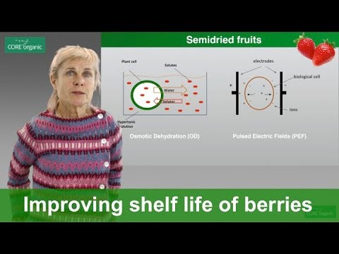 Mild technologies to improve shelf life and quality of organic berries (Ecoberries)