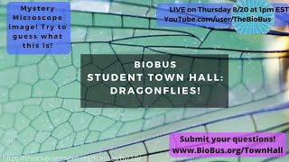 BioBus Student Town Hall: Dragonflies!