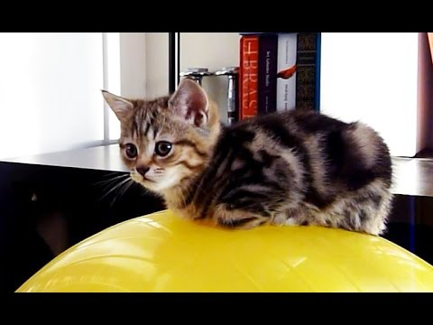 A ball is the best bed for Cute Kitten
