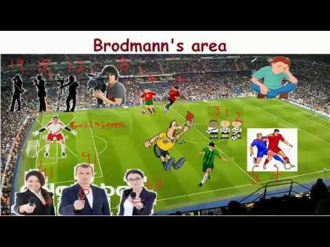 Visual Mnemonic brodmanns area- backbenchers revolution