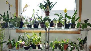 兰花冬天室内的生长环境